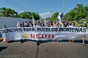 Mar de Fueguitos: bosques,  carbono  y  capitalismo  REDD+  en  México