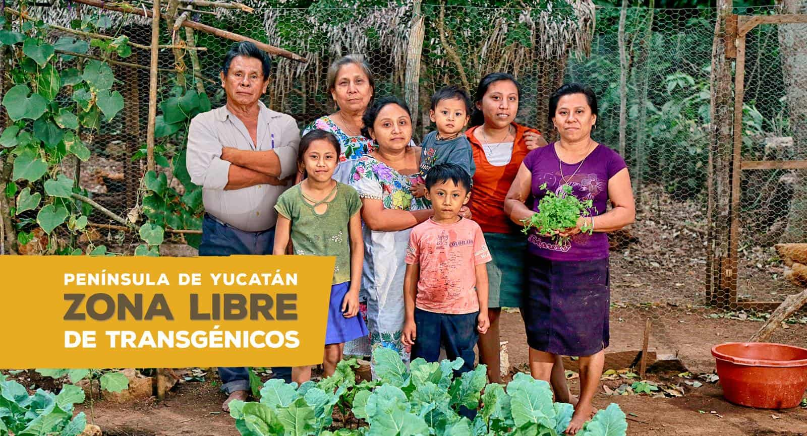 Mar de Fueguitos: la  lucha  contra  la  soya  transgénica  en  México
