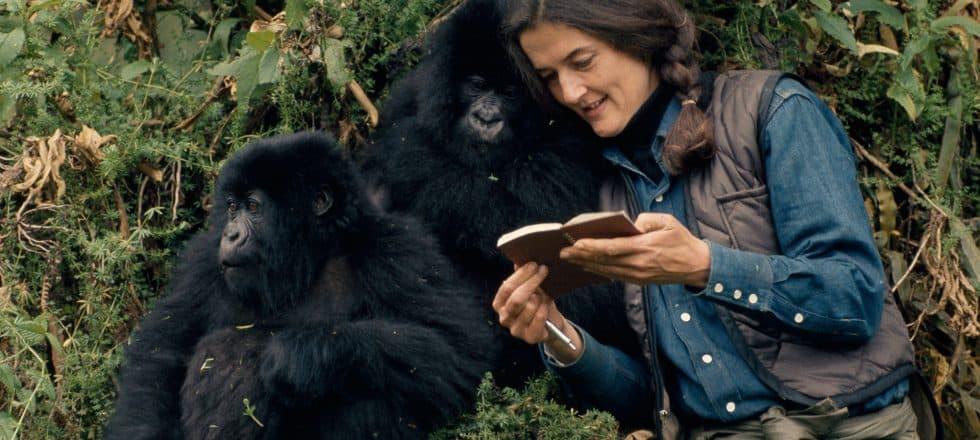 El Laboratorio de Medea: ¿Somos como los chimpancés?