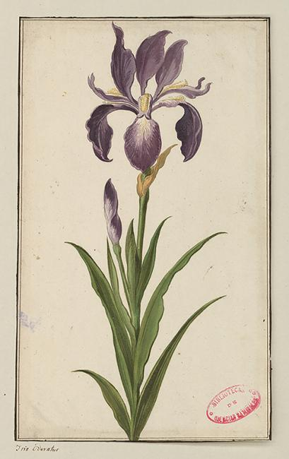 El Laboratorio de Medea: Botánica,  arte  y  mujeres